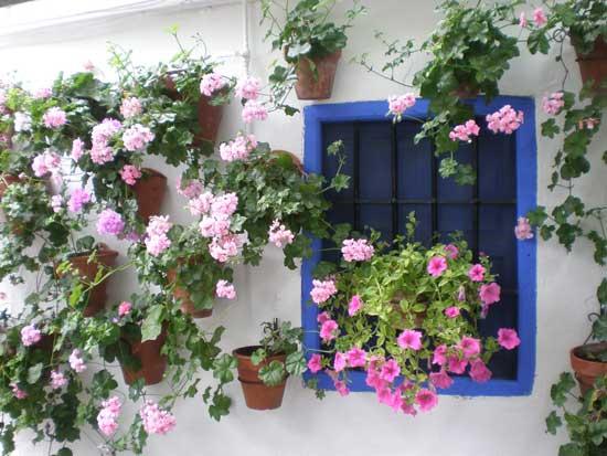 Los patios de c rdoba belleza eres t - Plantas para patio ...