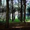 El Árbol es Vida