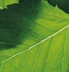 Los fabricantes cosméticos apoyan la sostenibilidad