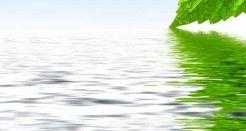 Cosmética y alimentación ecológica a golpe de click