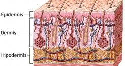 El conocimiento de la piel
