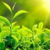 Verde que te quiero greenery
