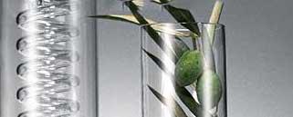 olivolea