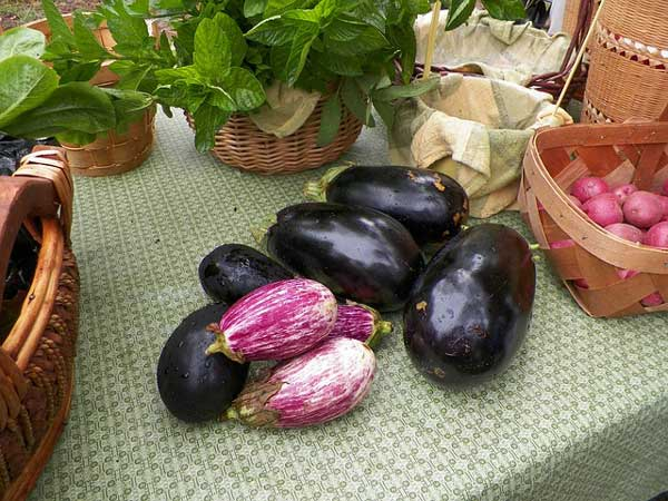 eggplant-445427_640